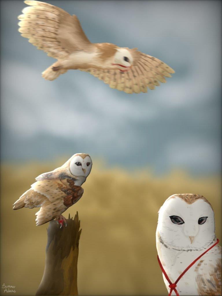 Summer's Owls